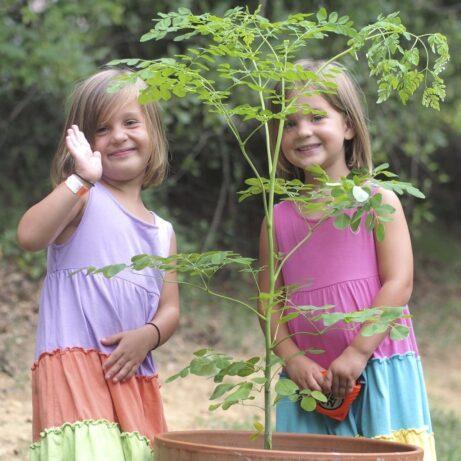 Moringa Tree For Sale!