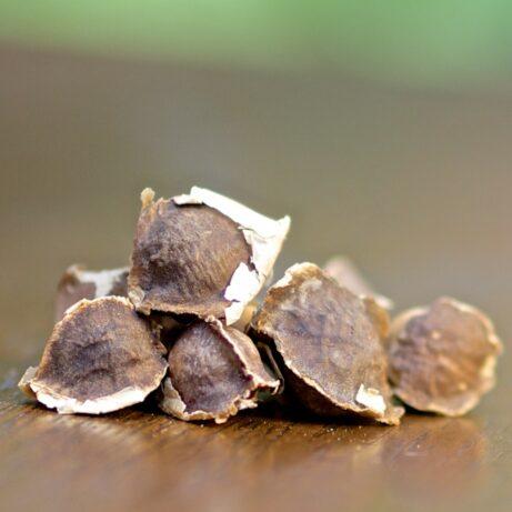 Moringa Seeds: Oleifera Seeds