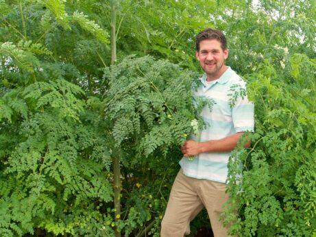 Harvesting Fresh Moringa Leaves