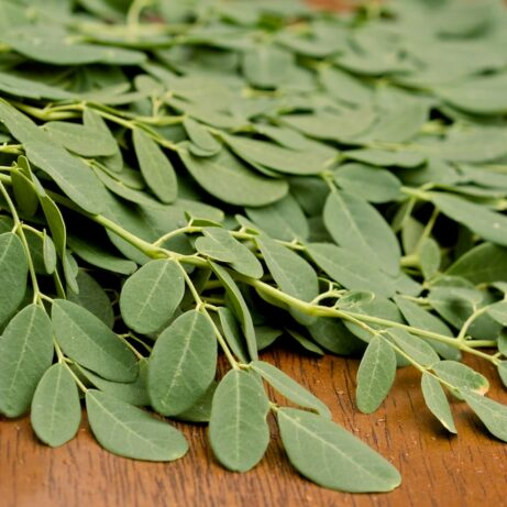 Fresh Moringa Leaves For Sale