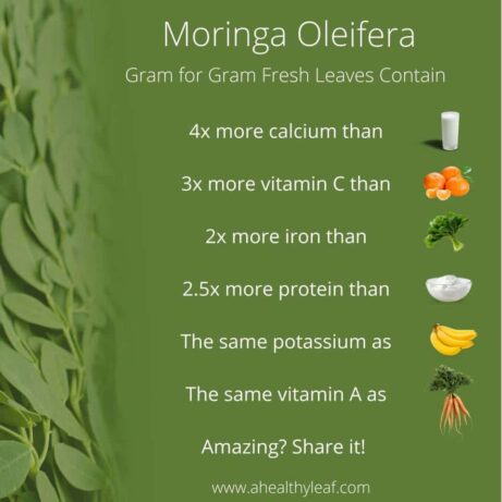 Moringa Fresh Leaves