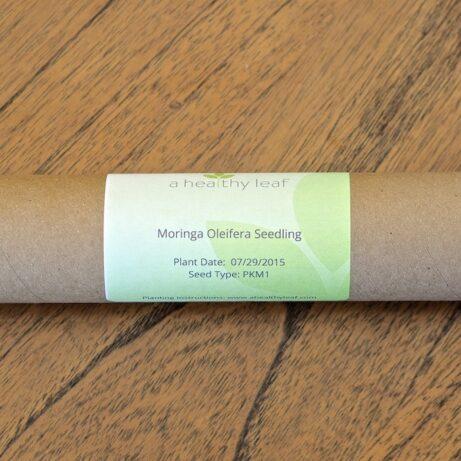Moringa Tree: Moringa Oleifera Trees