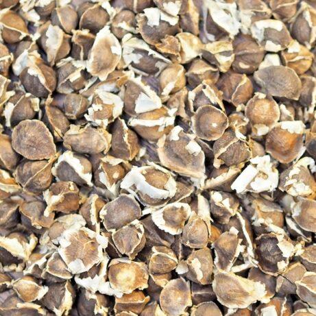 Organic Moringa Oleifera Seeds