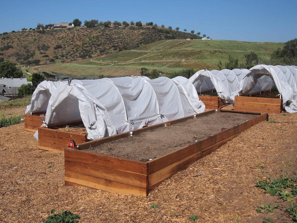 Bed for Intensive Moringa Planting
