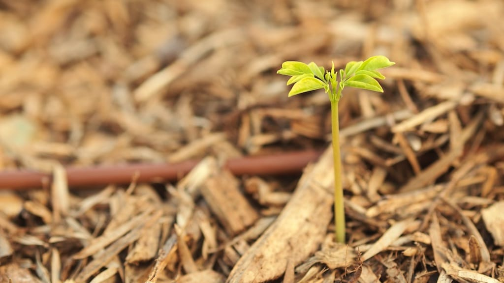 Learn to Grow Moringa