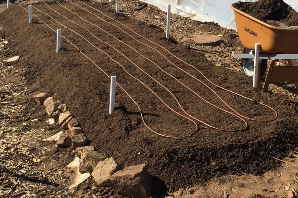 Moringa plot ready to plant