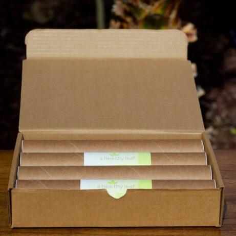 Moringa Plant: 8 Pack