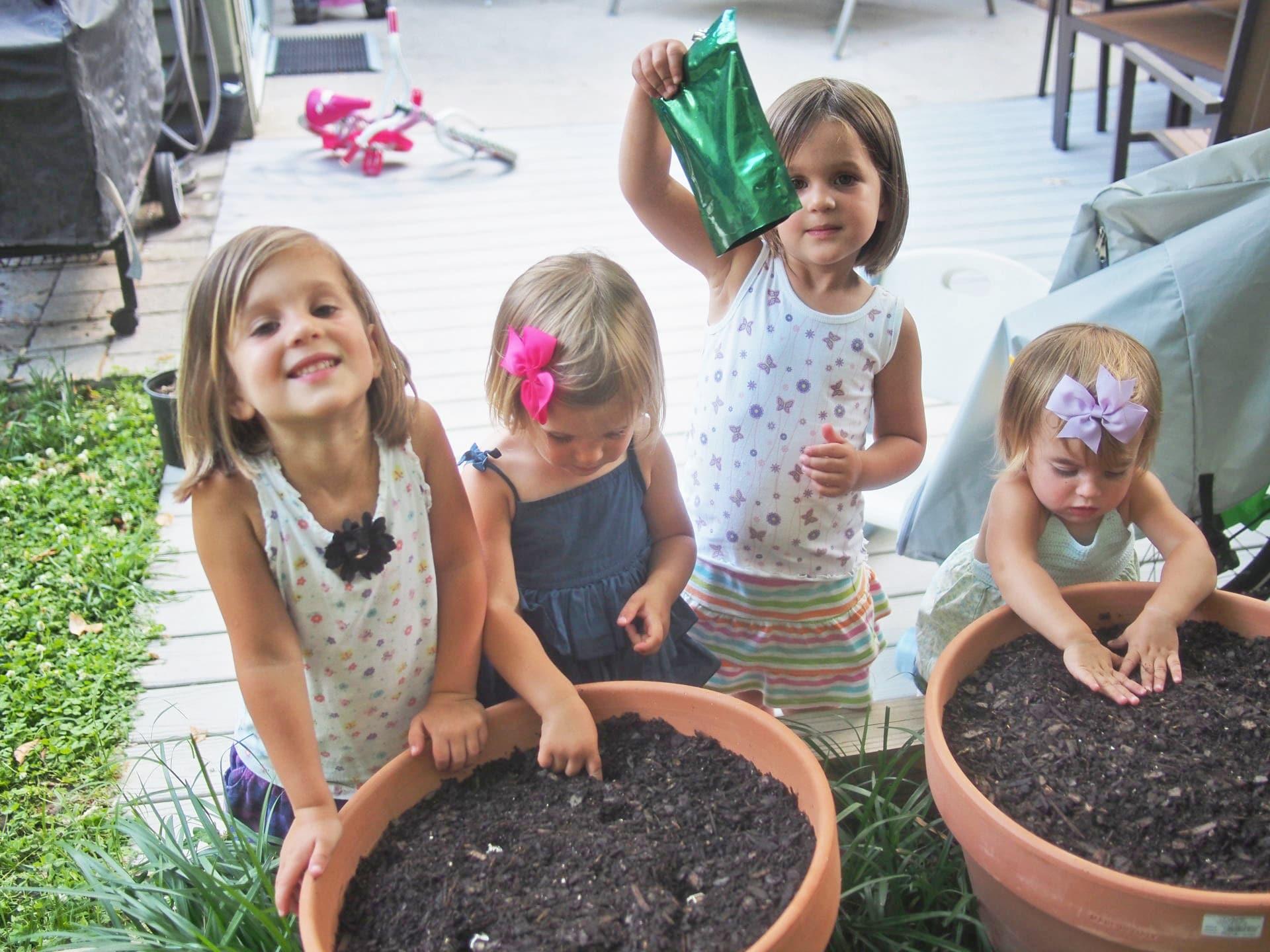 Free Moringa Seeds
