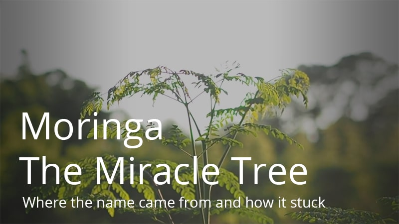 The Miracle Tree - Moringa