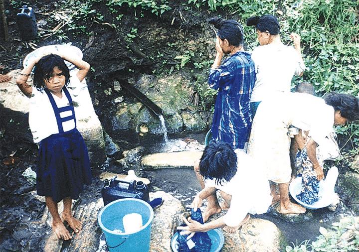 Moringa for emergency water treatment